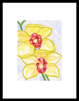 keukenhof 007 - 13 x 19 limited edition print